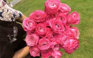 高端花艺——厄瓜多尔玫瑰